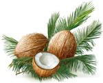 新鲜椰子矢量