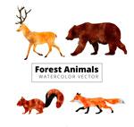 水彩绘森林动物