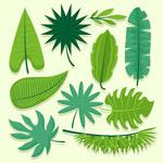 各种形状绿叶