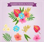 热带花卉和叶子