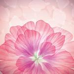粉色花瓣背景