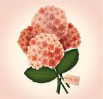 美丽绣球花花束