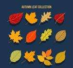 美丽秋季树叶
