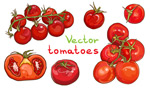 红色手绘西红柿