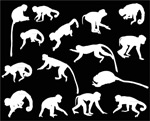 白色猴子剪影