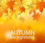 橙色秋季树叶