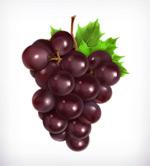 美味紫色葡萄