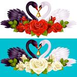 天鹅和玫瑰花