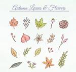 秋季叶子和花朵