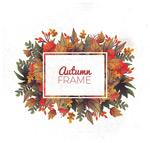 秋季落叶框架