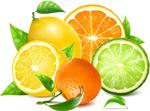新鲜橙子和柠檬
