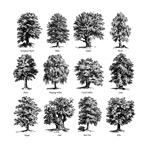手绘茂盛树木