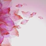 水彩绘动感花瓣