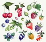 水彩绘新鲜水果