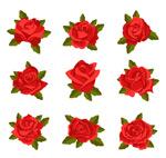 带叶玫瑰花矢量