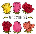彩色玫瑰花设计