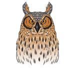彩绘褐色猫头鹰