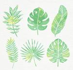 水彩绘绿色棕榈树