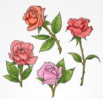 彩色单枝玫瑰花