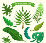 绿色棕榈树叶