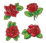 红玫瑰花矢量