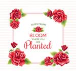 红色玫瑰花框架