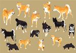 四国犬和柴犬