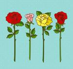 彩色玫瑰花花枝