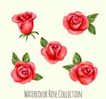 水彩绘红玫瑰