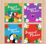 热带花鸟卡片