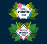 热带花草框架