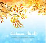 秋季金色树木树叶
