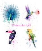 水彩鸟矢量