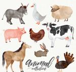 水彩绘农场动物