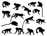 创意猴子剪影
