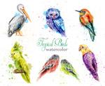 水彩鸟类集合