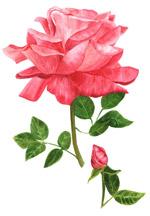 彩绘玫瑰花设计