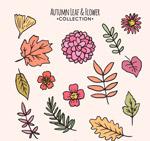 秋季树叶和花卉
