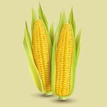 逼真玉米矢量