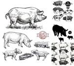 素描黑白家猪