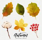 水彩绘秋季植物