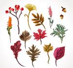 彩绘秋季植物