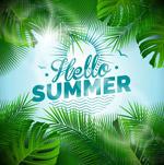 夏季棕榈树叶框架