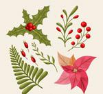 彩色圣诞节植物