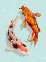 日本锦鲤鱼