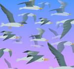 彩绘海鸥群