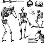 骨骼骷髅动作