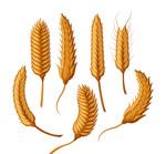 创意麦穗设计