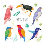 彩绘鸟类矢量
