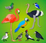 9款精美鸟类